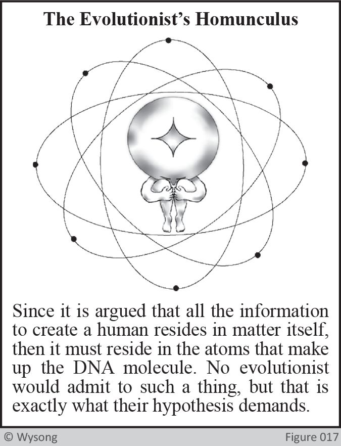 The Evolutionists Homunculus