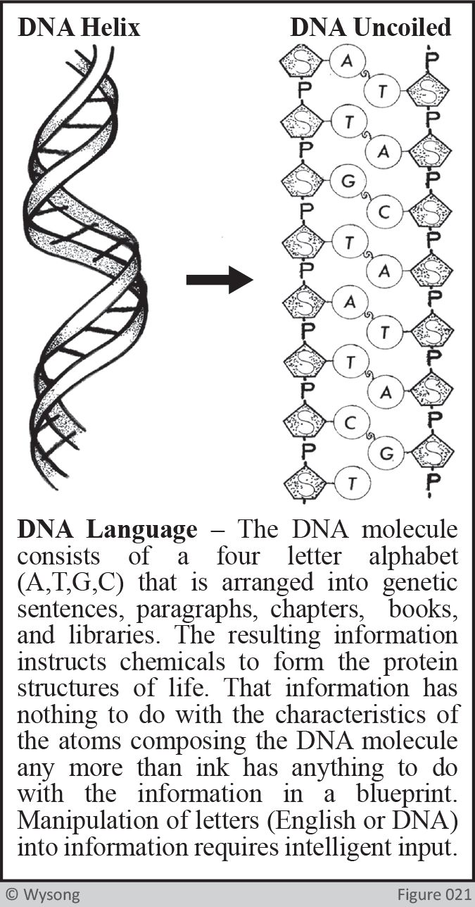 DNA Language