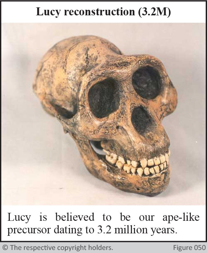 Lucy Reconstruction, Castenedolo Skull