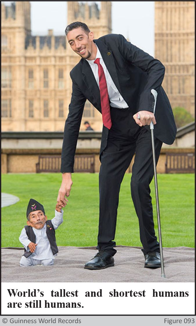 Worlds Tallest and Shortest Man