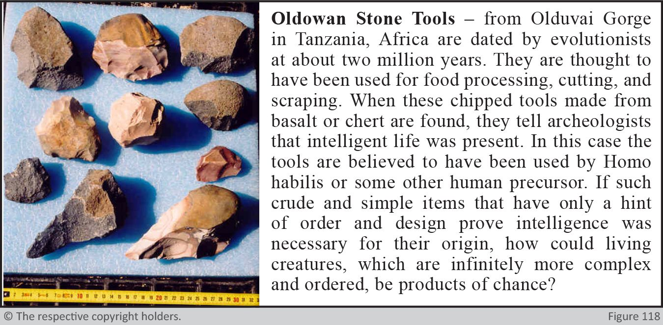 The Oldowan Stone tools
