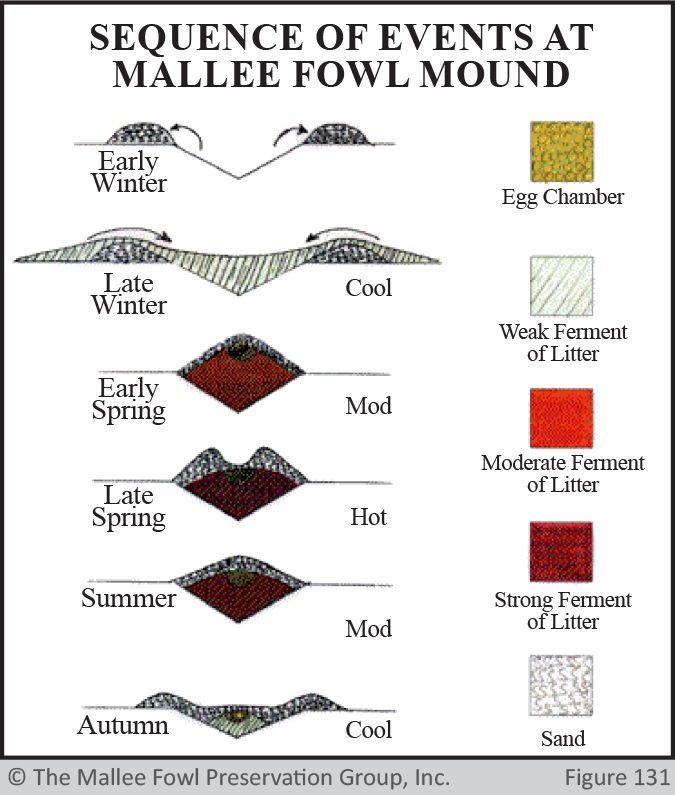 Mallee Fowl Mound