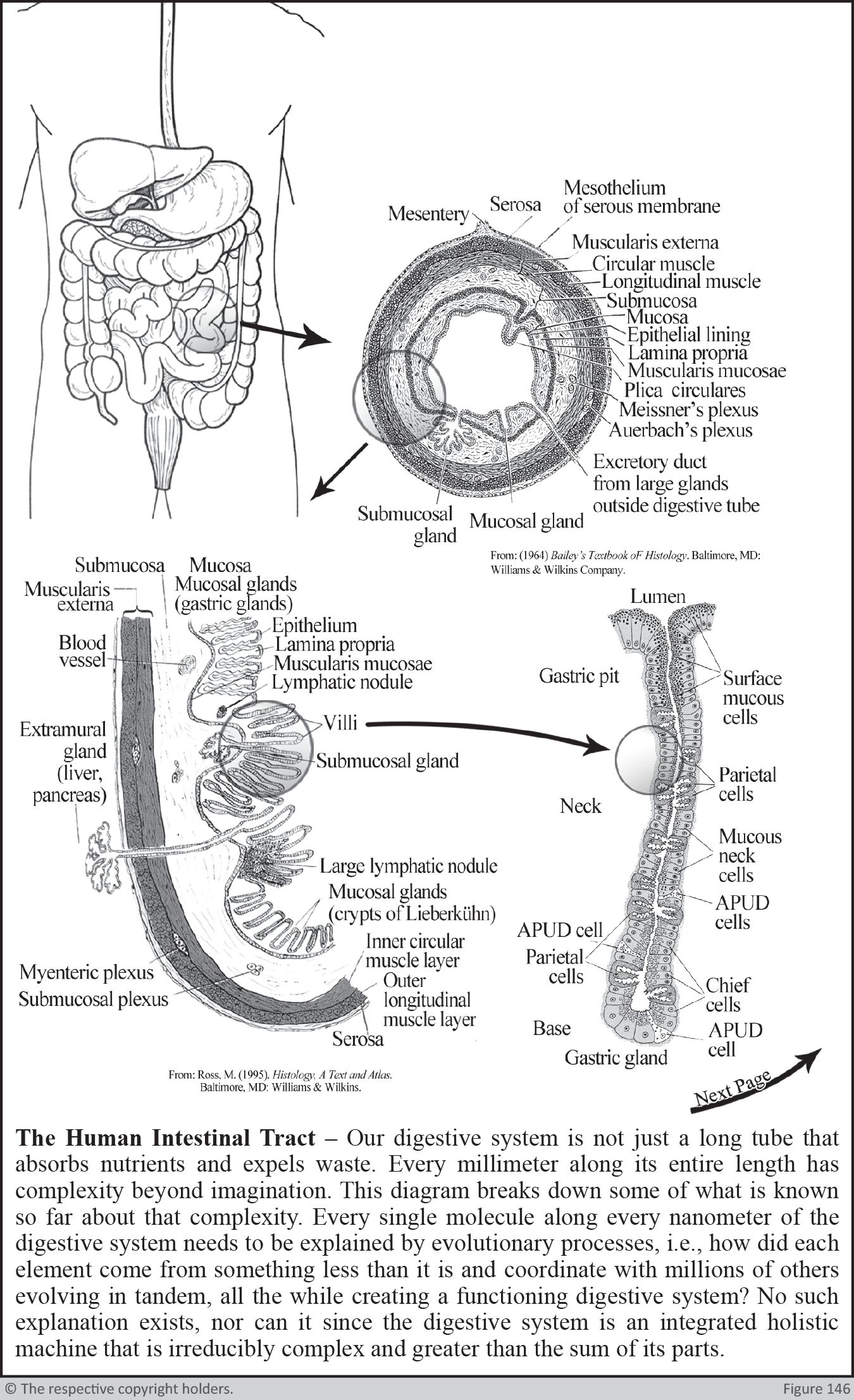 The Human intestinal Tract Part1