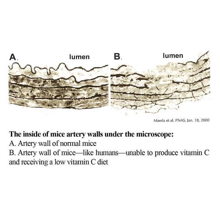Mice Artery Walls