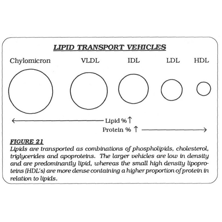 Lipid Transport Vehicles
