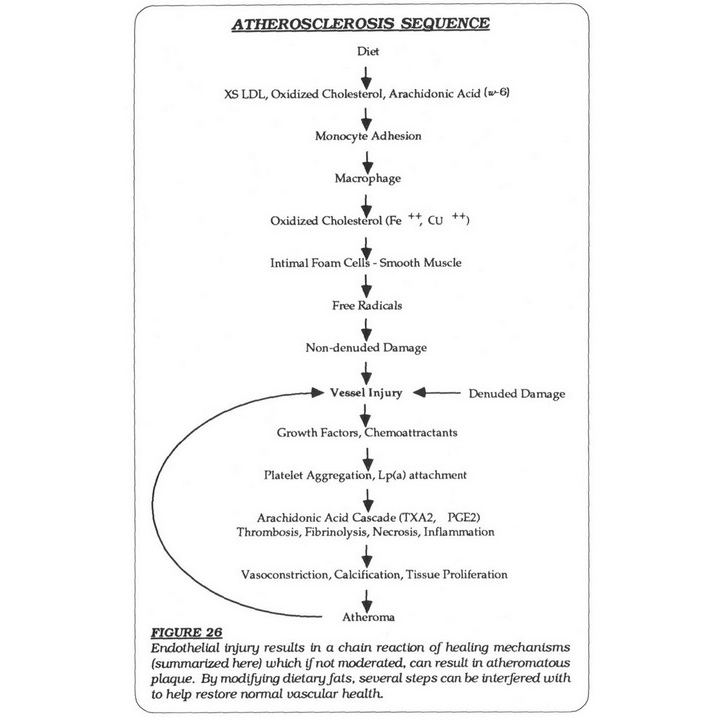 Atherosclerosis Sequence