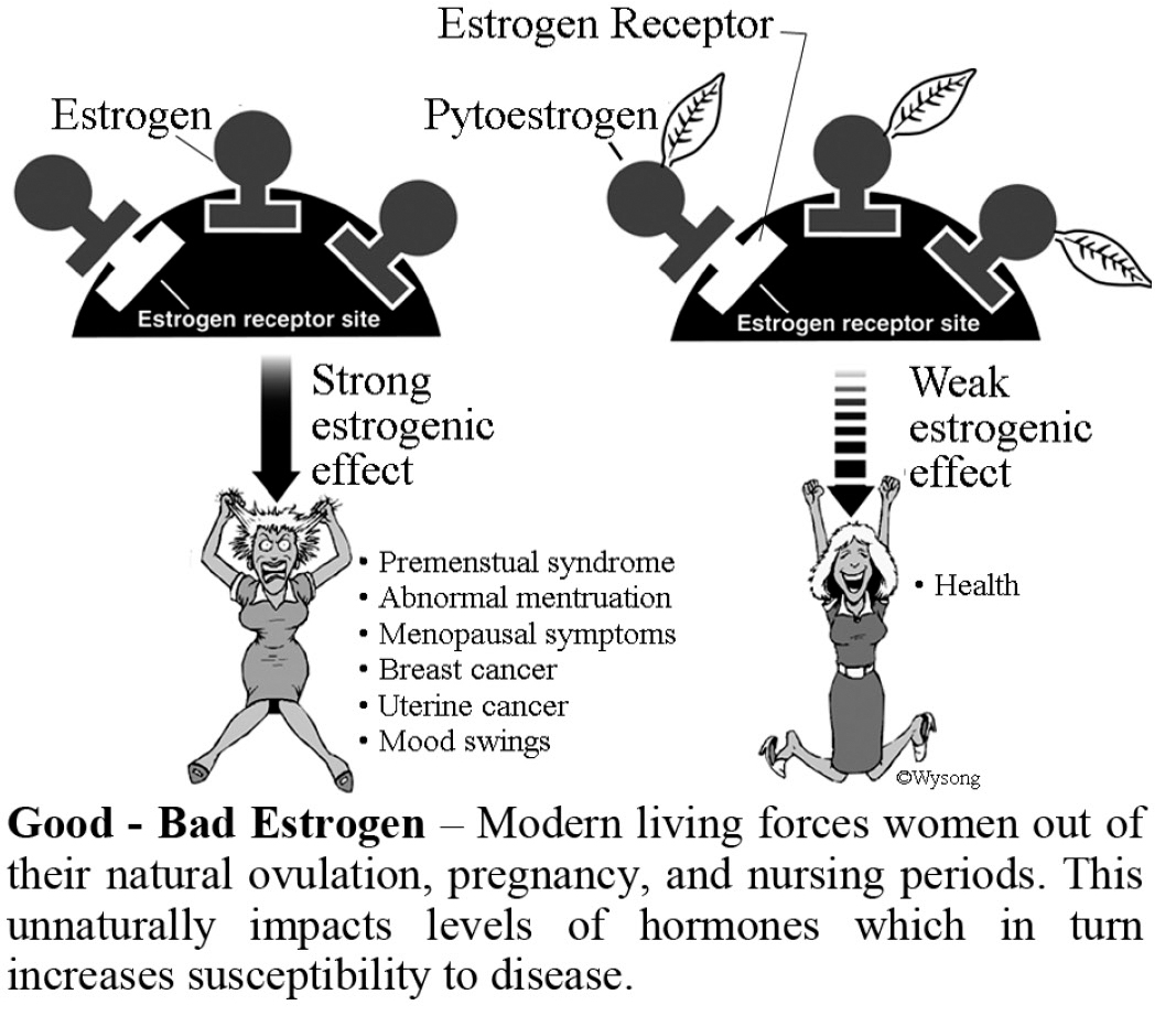 Good - Bad Estrogen