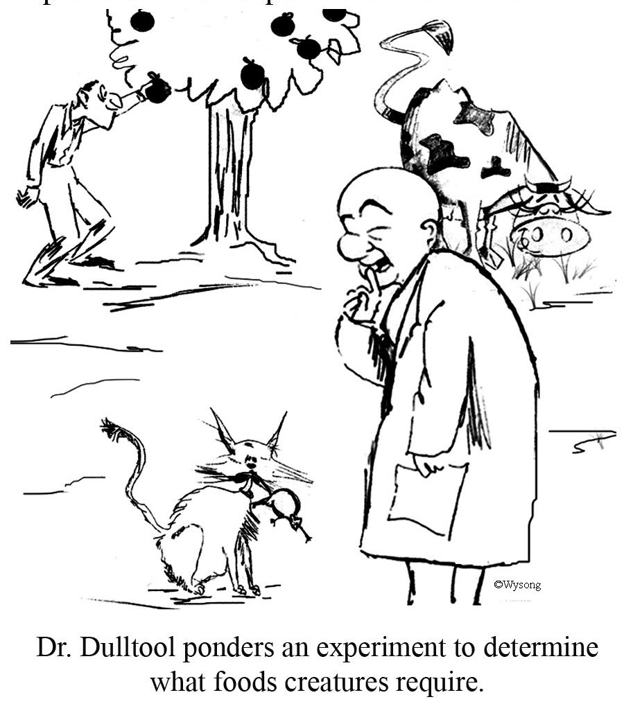 Dr Dulltool