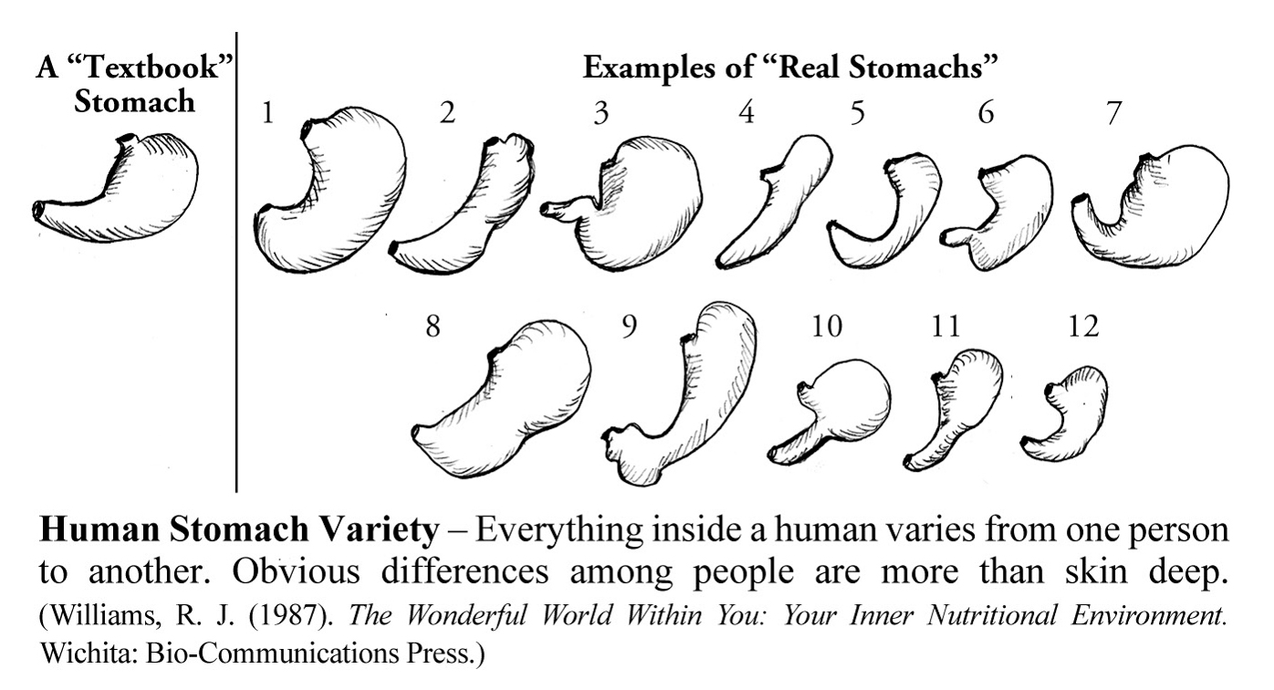 Human Stomach Variety