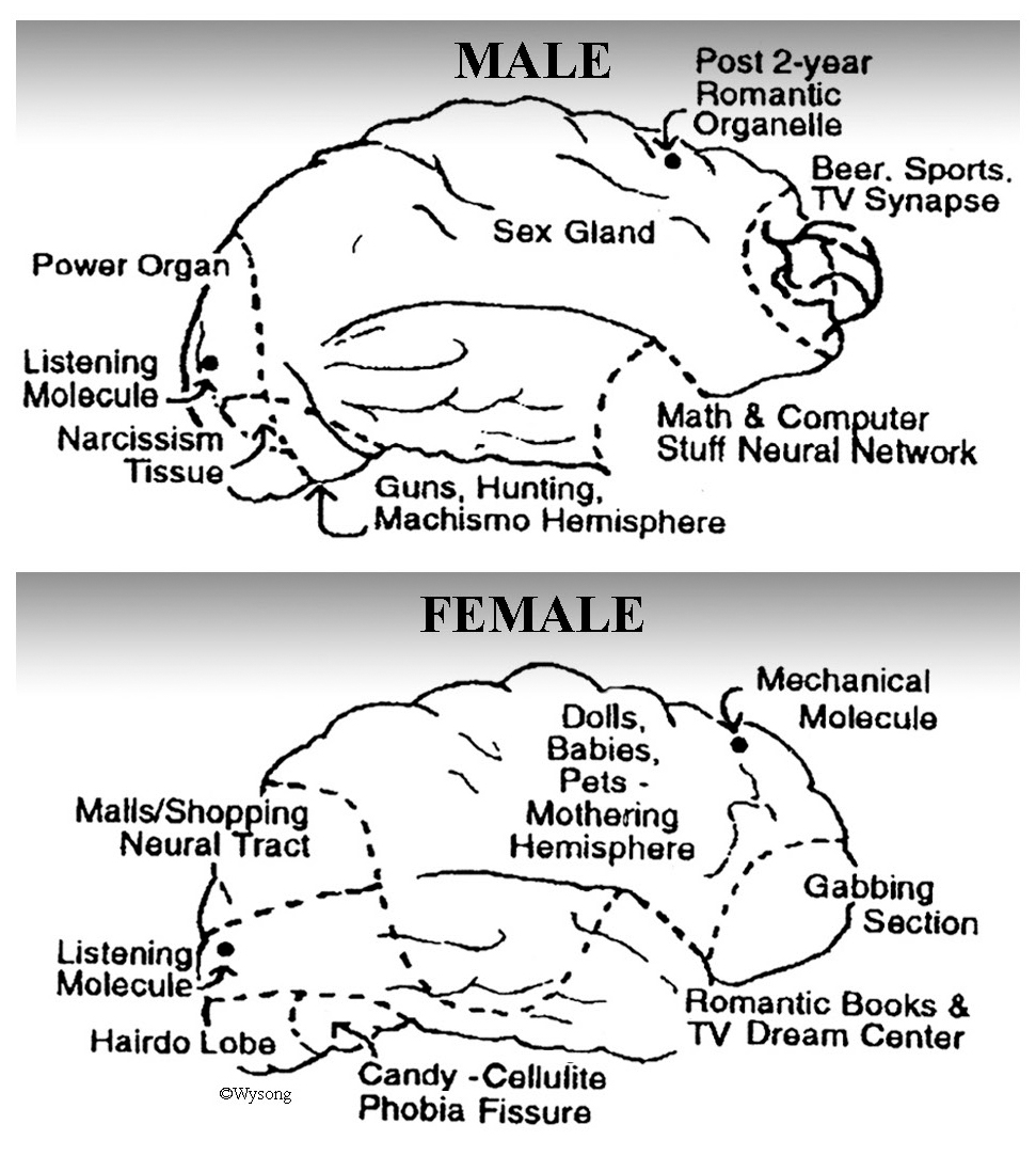 Male vs Female Brain
