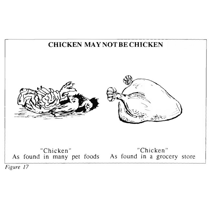 Chicken My Not Be Chicken