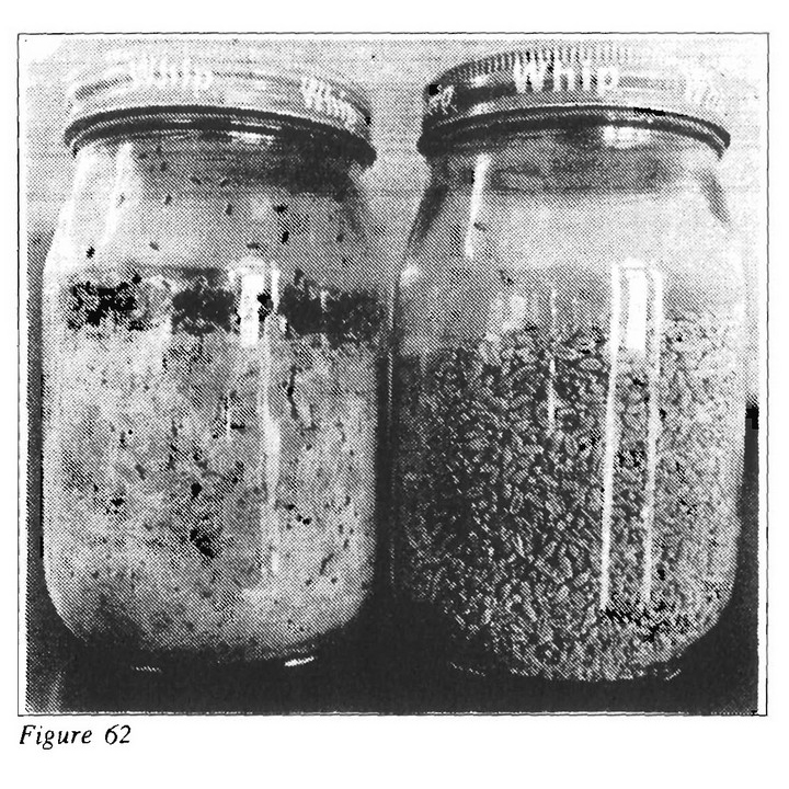 Plankton Treated Grains