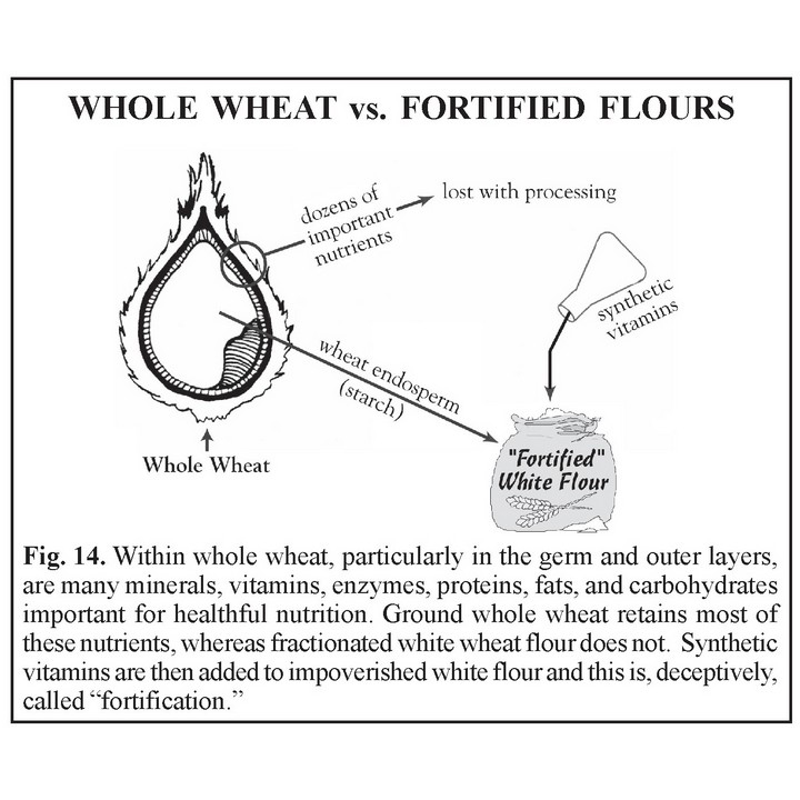 Whole Wheat vs Fortified Flours