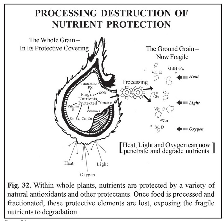 Processing Destruction of Nutrition Protection