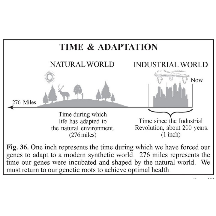 Time and Adoption